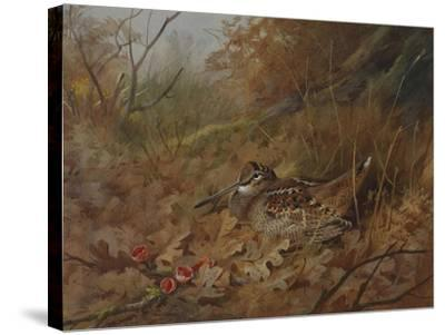 A Woodcock Nesting in Autumn Leaves-Archibald Thorburn-Stretched Canvas Print