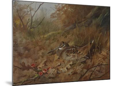 A Woodcock Nesting in Autumn Leaves-Archibald Thorburn-Mounted Giclee Print