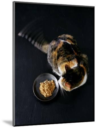 Gourmet - November 2005-Romulo Yanes-Mounted Premium Photographic Print