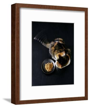 Gourmet - November 2005-Romulo Yanes-Framed Premium Photographic Print