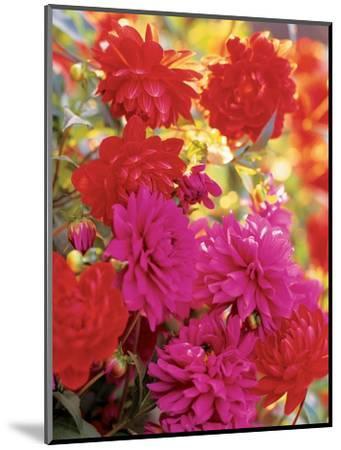 House & Garden - April 2003-Alexandre Bailhache-Mounted Premium Photographic Print