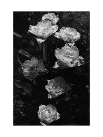 House & Garden - September 1937-Walter Beebe Wilder-Framed Premium Photographic Print