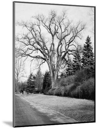 House & Garden - January 1945-Tom Leonard-Mounted Premium Photographic Print
