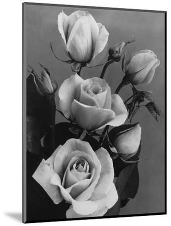 House & Garden - October 1934-J. Horace McFarland-Mounted Premium Photographic Print