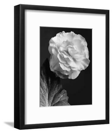 House & Garden - February 1944-J. Horace McFarland-Framed Premium Photographic Print