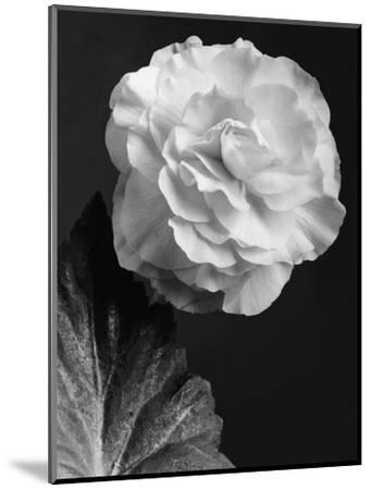 House & Garden - February 1944-J. Horace McFarland-Mounted Premium Photographic Print