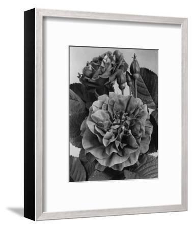 House & Garden - May 1940-J. Horace McFarland-Framed Premium Photographic Print