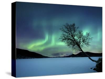 Aurora Borealis over Sandvannet Lake in Troms County, Norway-Stocktrek Images-Stretched Canvas Print