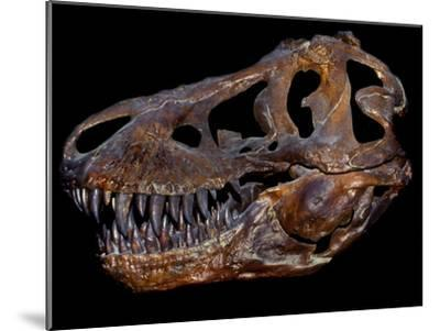 A Genuine Fossilized Skull of a T. Rex-Stocktrek Images-Mounted Photographic Print