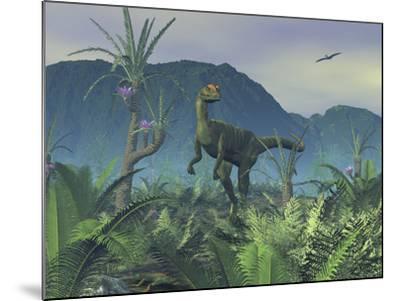 A Colorful Adult Male Dilophosaurus Explores a Hilltop-Stocktrek Images-Mounted Photographic Print