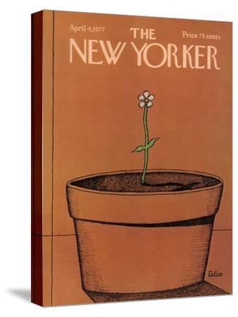 The New Yorker Cover - April 4, 1977-Robert Tallon-Stretched Canvas Print