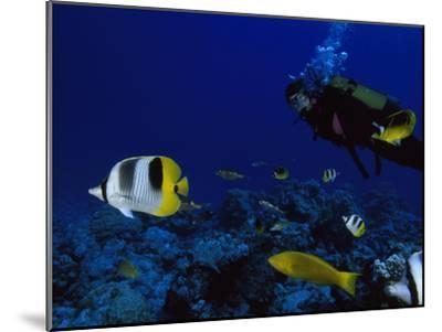 A Diver Swims with Butterfly Fish and Other Fish-Tim Laman-Mounted Photographic Print