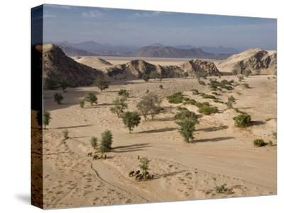 Desert Elephants and Trees-Michael Poliza-Stretched Canvas Print