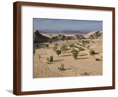 Desert Elephants and Trees-Michael Poliza-Framed Photographic Print
