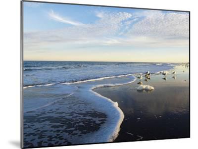 Common Sea Gulls and Surf-Mauricio Handler-Mounted Photographic Print