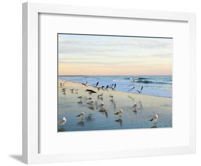 Common Sea Gulls and Surf-Mauricio Handler-Framed Photographic Print