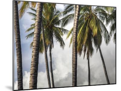 The Midsection of a Group of Palm Trees on the Island of Molokai-Pete Ryan-Mounted Photographic Print