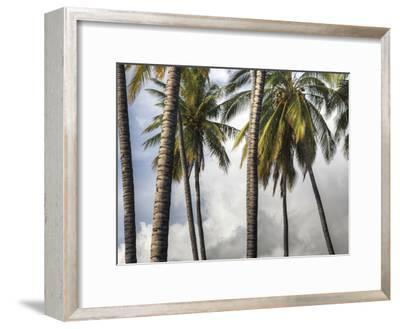 The Midsection of a Group of Palm Trees on the Island of Molokai-Pete Ryan-Framed Photographic Print