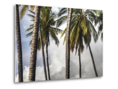 The Midsection of a Group of Palm Trees on the Island of Molokai-Pete Ryan-Metal Print