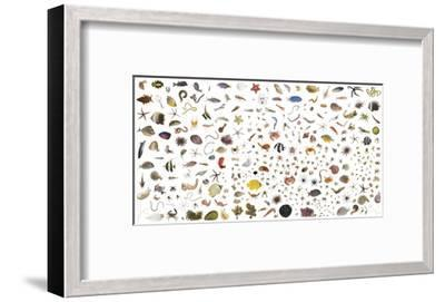 Coral reef species collected within a one cubic foot metal cube.-David Liittschwager-Framed Photographic Print