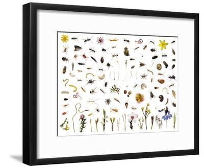Mountain fynbos species collected within a one cubic foot metal cube.-David Liittschwager-Framed Photographic Print