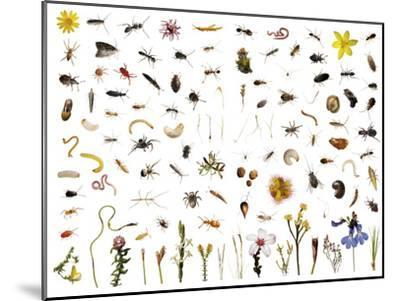 Mountain fynbos species collected within a one cubic foot metal cube.-David Liittschwager-Mounted Photographic Print