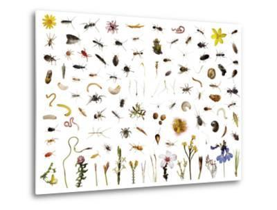 Mountain fynbos species collected within a one cubic foot metal cube.-David Liittschwager-Metal Print