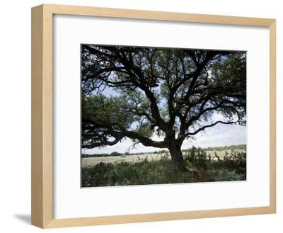 A Ranch Landscape with a Large Tree-Joel Sartore-Framed Photographic Print