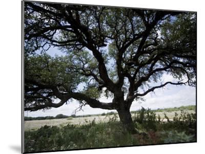 A Ranch Landscape with a Large Tree-Joel Sartore-Mounted Photographic Print