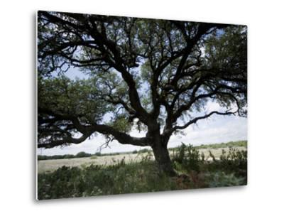 A Ranch Landscape with a Large Tree-Joel Sartore-Metal Print