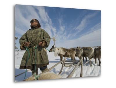 Reindeer Rest after Wallowing Through Deep, Wet Spring Snow-Gordon Wiltsie-Metal Print