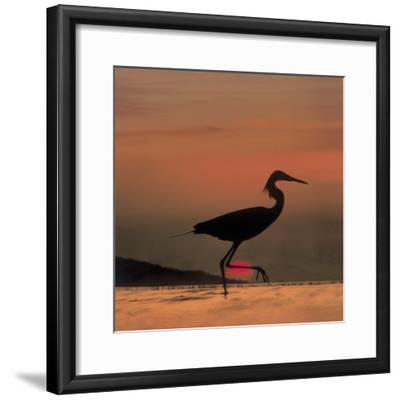 Little Egret (Egretta Garzetta) Silhouetted at Sunset, Africa-Tim Fitzharris/Minden Pictures-Framed Photographic Print