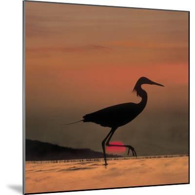 Little Egret (Egretta Garzetta) Silhouetted at Sunset, Africa-Tim Fitzharris/Minden Pictures-Mounted Photographic Print