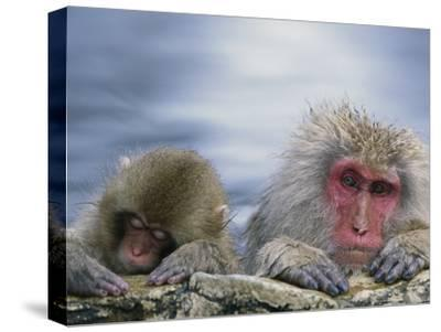 Japanese Macaque (Macaca Fuscata) Mother and Juvenile, Joshinetsu Plateau Nat'l Park, Japan-Ingo Arndt/Minden Pictures-Stretched Canvas Print