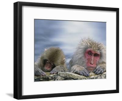 Japanese Macaque (Macaca Fuscata) Mother and Juvenile, Joshinetsu Plateau Nat'l Park, Japan-Ingo Arndt/Minden Pictures-Framed Photographic Print