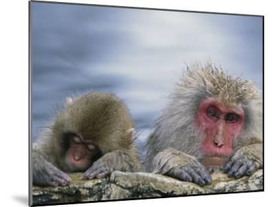 Japanese Macaque (Macaca Fuscata) Mother and Juvenile, Joshinetsu Plateau Nat'l Park, Japan-Ingo Arndt/Minden Pictures-Mounted Photographic Print