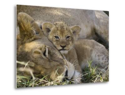 African Lion (Panthera Leo) Mother Resting with Cub, Vulnerable, Masai Mara Nat'l Reserve, Kenya-Suzi Eszterhas/Minden Pictures-Metal Print