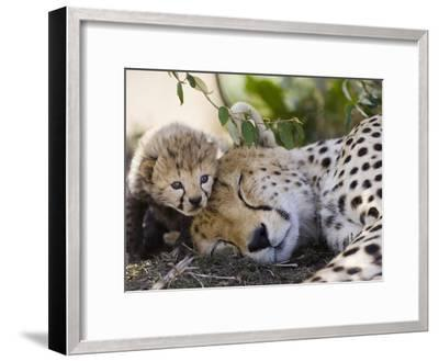 Cheetah (Acinonyx Jubatus) Mother and Seven Day Old Cub, Maasai Mara Reserve, Kenya-Suzi Eszterhas/Minden Pictures-Framed Photographic Print