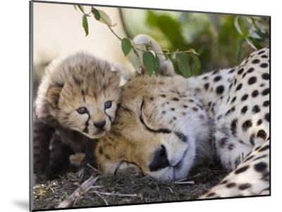 Cheetah (Acinonyx Jubatus) Mother and Seven Day Old Cub, Maasai Mara Reserve, Kenya-Suzi Eszterhas/Minden Pictures-Mounted Photographic Print