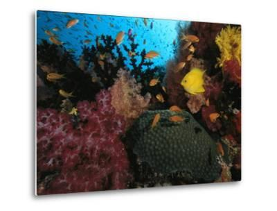 A Colorful Reef Scene with Soft and Hard Corals, and Schools of Fish-Tim Laman-Metal Print