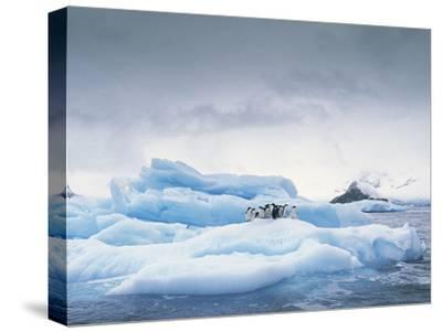 Adelie Penguin (Pygoscelis Adeliae) Group on Iceberg, Antarctic Peninsula-Gerry Ellis-Stretched Canvas Print