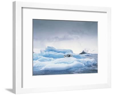 Adelie Penguin (Pygoscelis Adeliae) Group on Iceberg, Antarctic Peninsula-Gerry Ellis-Framed Photographic Print