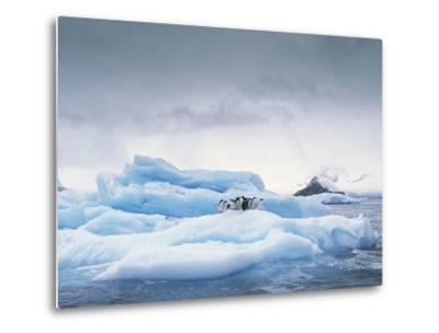 Adelie Penguin (Pygoscelis Adeliae) Group on Iceberg, Antarctic Peninsula-Gerry Ellis-Metal Print