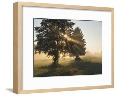 Sun Shining Through Trees and Morning Mist, Upper Bavaria, Germany-Konrad Wothe-Framed Photographic Print