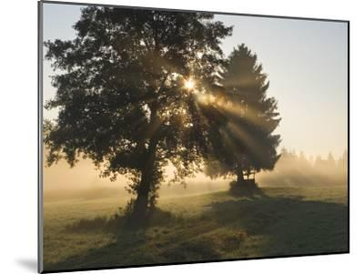 Sun Shining Through Trees and Morning Mist, Upper Bavaria, Germany-Konrad Wothe-Mounted Photographic Print
