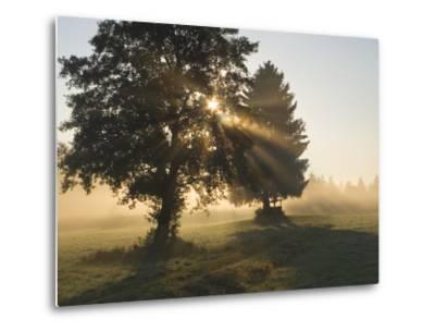 Sun Shining Through Trees and Morning Mist, Upper Bavaria, Germany-Konrad Wothe-Metal Print