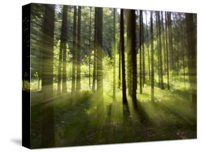 Forest Light Impression, Bavaria, Germany-Konrad Wothe-Stretched Canvas Print