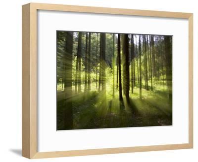 Forest Light Impression, Bavaria, Germany-Konrad Wothe-Framed Photographic Print