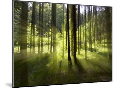 Forest Light Impression, Bavaria, Germany-Konrad Wothe-Mounted Photographic Print