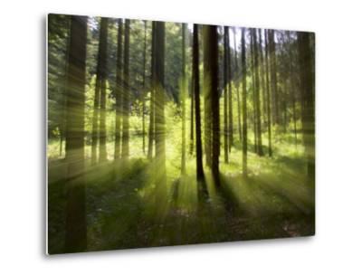 Forest Light Impression, Bavaria, Germany-Konrad Wothe-Metal Print